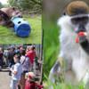 >Dartmoor Zoo